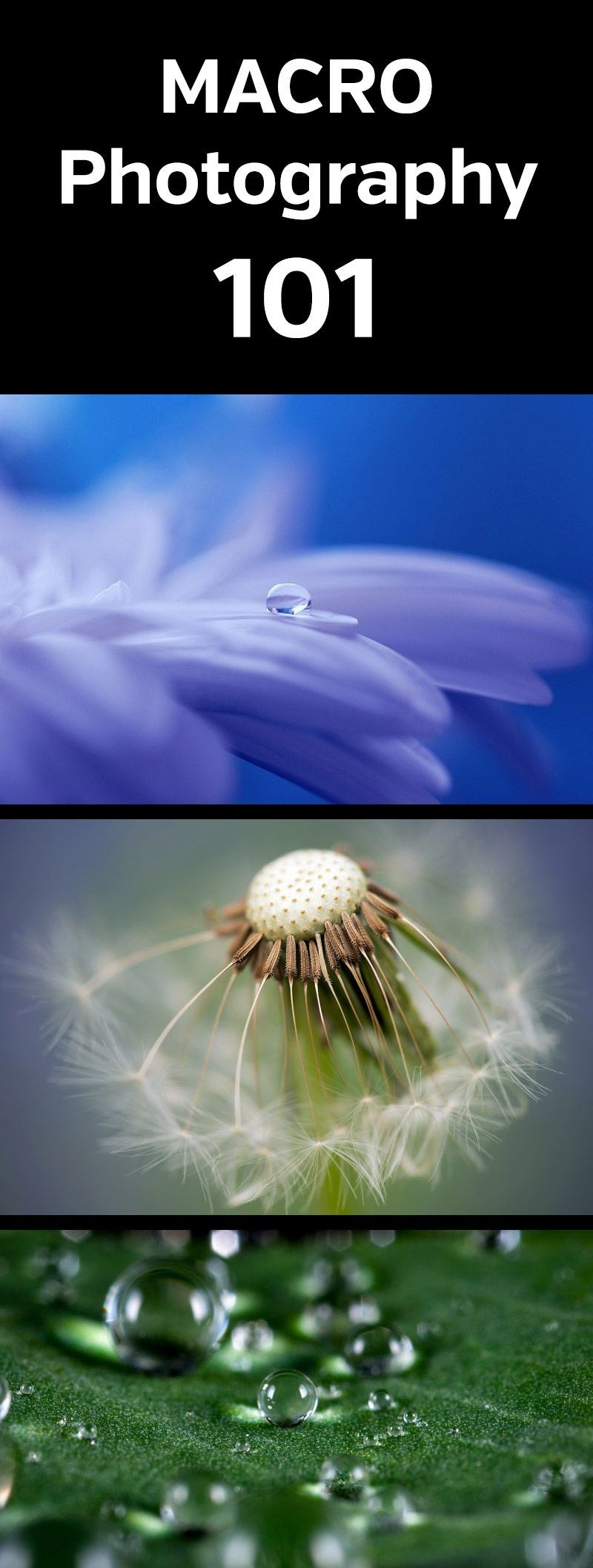 Macro Photography 101. Intro to macro photography and how to get amazing close u...