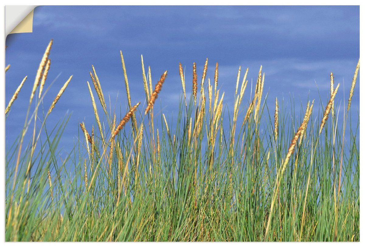 Premium wall film »S. Herppich: Beach grass in summer «