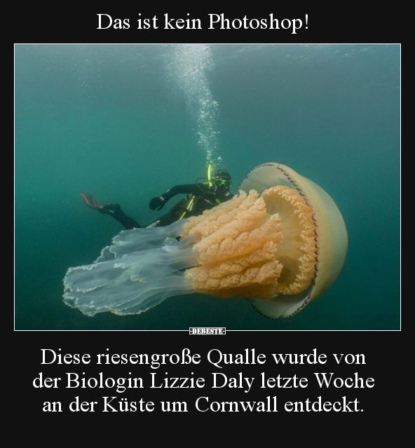 This is not a Photoshop! This huge jellyfish was created by .. | Funny pictures, ...